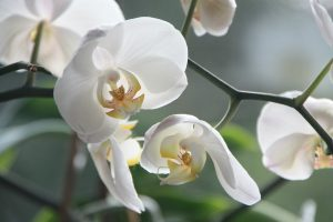 orchid-4780_1280